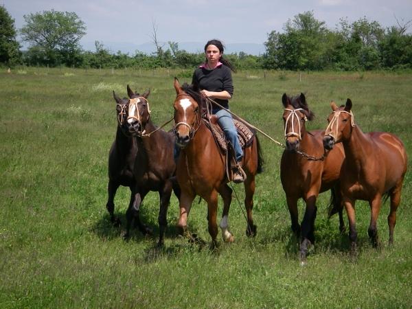 Lots chevaux polo Lyon