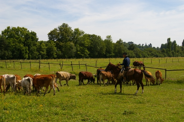 Monsieur Okie Boon étalon Quarter Horse Ranch Roping