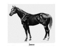 Janus-medium