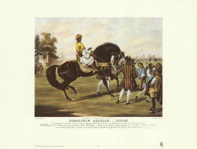 godolphin-Arabian-Scham-Posters